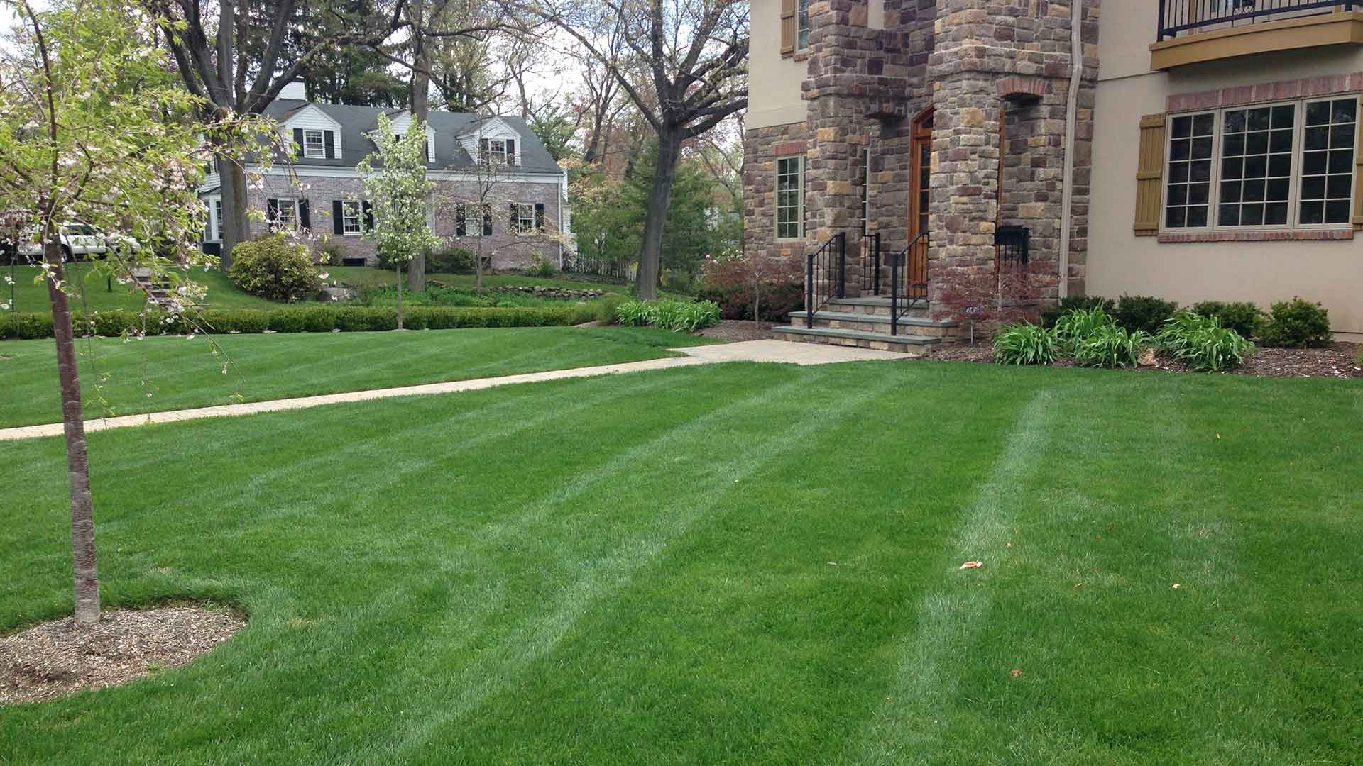 Green and lush front lawn in Scotch Plains, NJ.