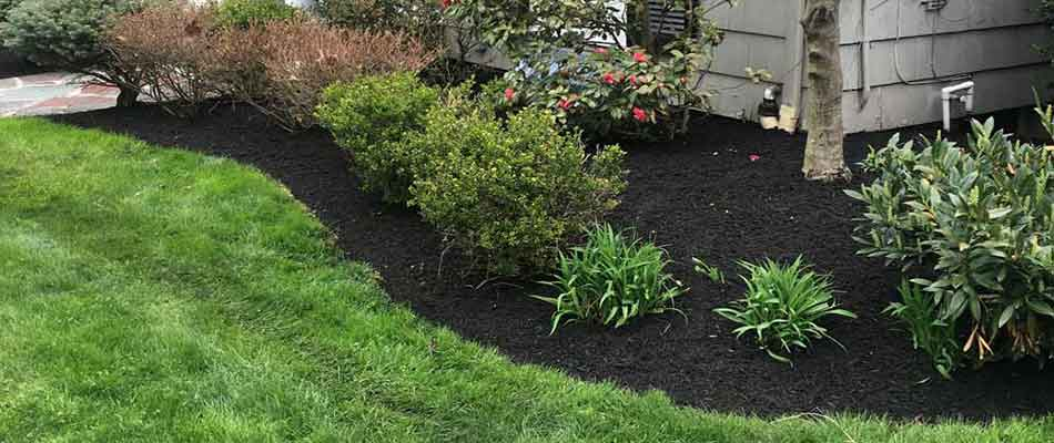 Black mulch installed by Greenscapes Landscape Management for a Cranford, NJ home.