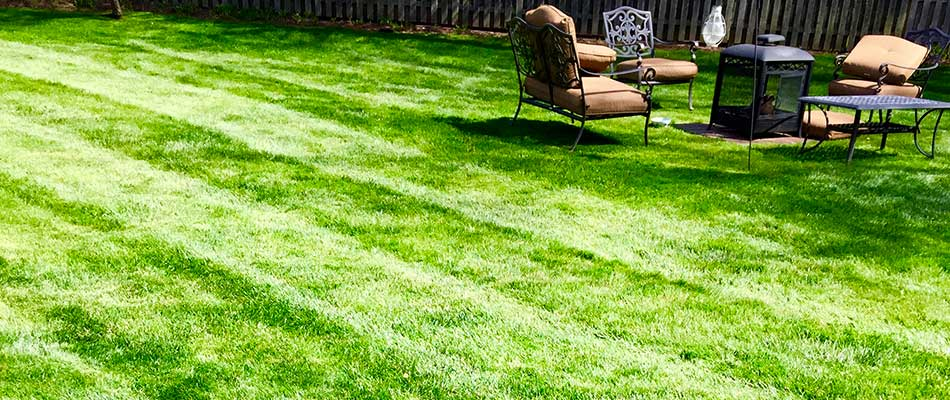 Lawn after aeration service at Westfield, NJ home.