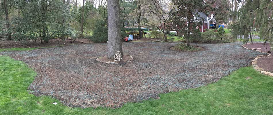 Cranford, NJ property with overseeding done by Greenscapes Landscape Management.