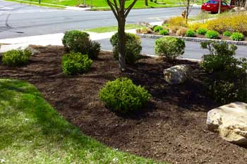 Landscaping with new mulch and shrubs in front of a home in Westfield.