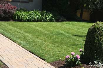 Beautiful lawn at a home in Cranford that is regularly treated and fertilized by Greenscapes Landscape Management.